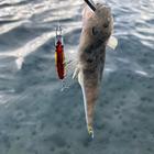 釣り忠の釣果