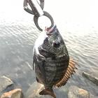 ボトムチニング1717の釣果