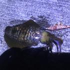 TSUNAGUの釣果