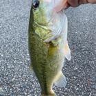 LUSH⁇の釣果