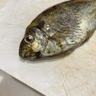 fishremanの釣果