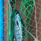壱釣屋の釣果