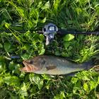 釣りなら毎日出来る人の釣果