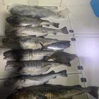 週末釣りキチの釣果