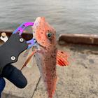 のれそれ!あおもり釣り日和。の釣果