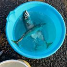 最近釣り太郎の釣果