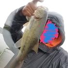 ホワイト・アズナブルの釣果