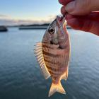 海釣りが好きな人の釣果