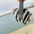 人魚の海の釣果