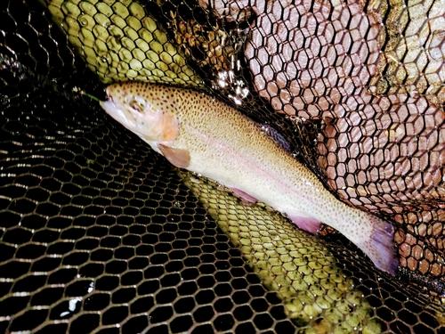 ベリーパーク in FISH ON! 王禅寺