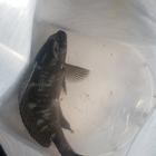 フカセ1年生の釣果