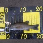 釣り格闘技の釣果