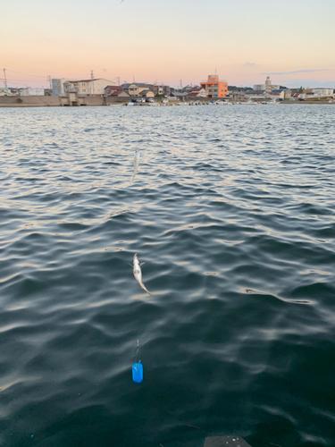セントレア常滑港前島