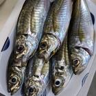 koyoppaの釣果