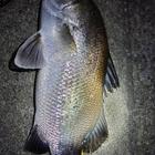fishermans-hiroの釣果