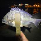 釣りのぬっし〜の釣果