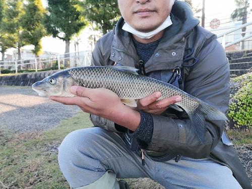 瀬田川上流