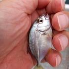 のんびり魚釣りの釣果