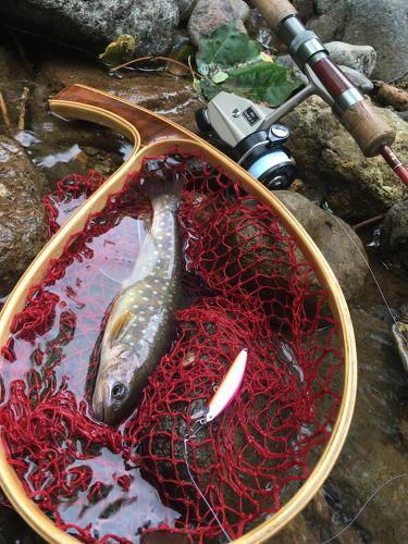 エゾイワナの釣果