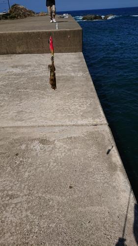 大丹生漁港