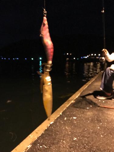 マツイカの釣果