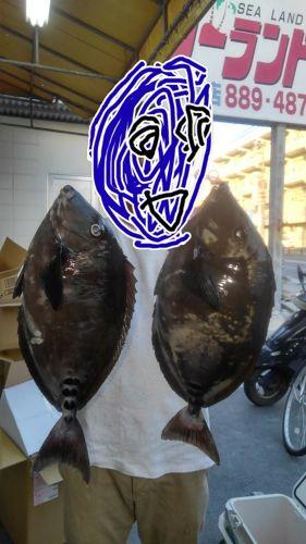 サンノジの釣果