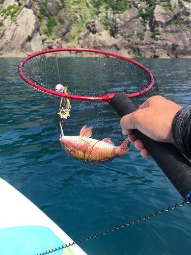 ヒメジの釣果